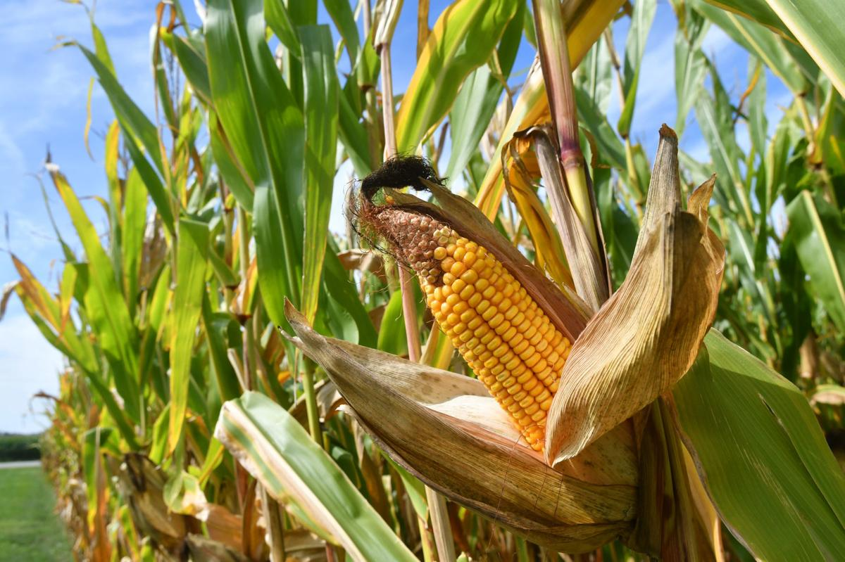 Harvest time for crops