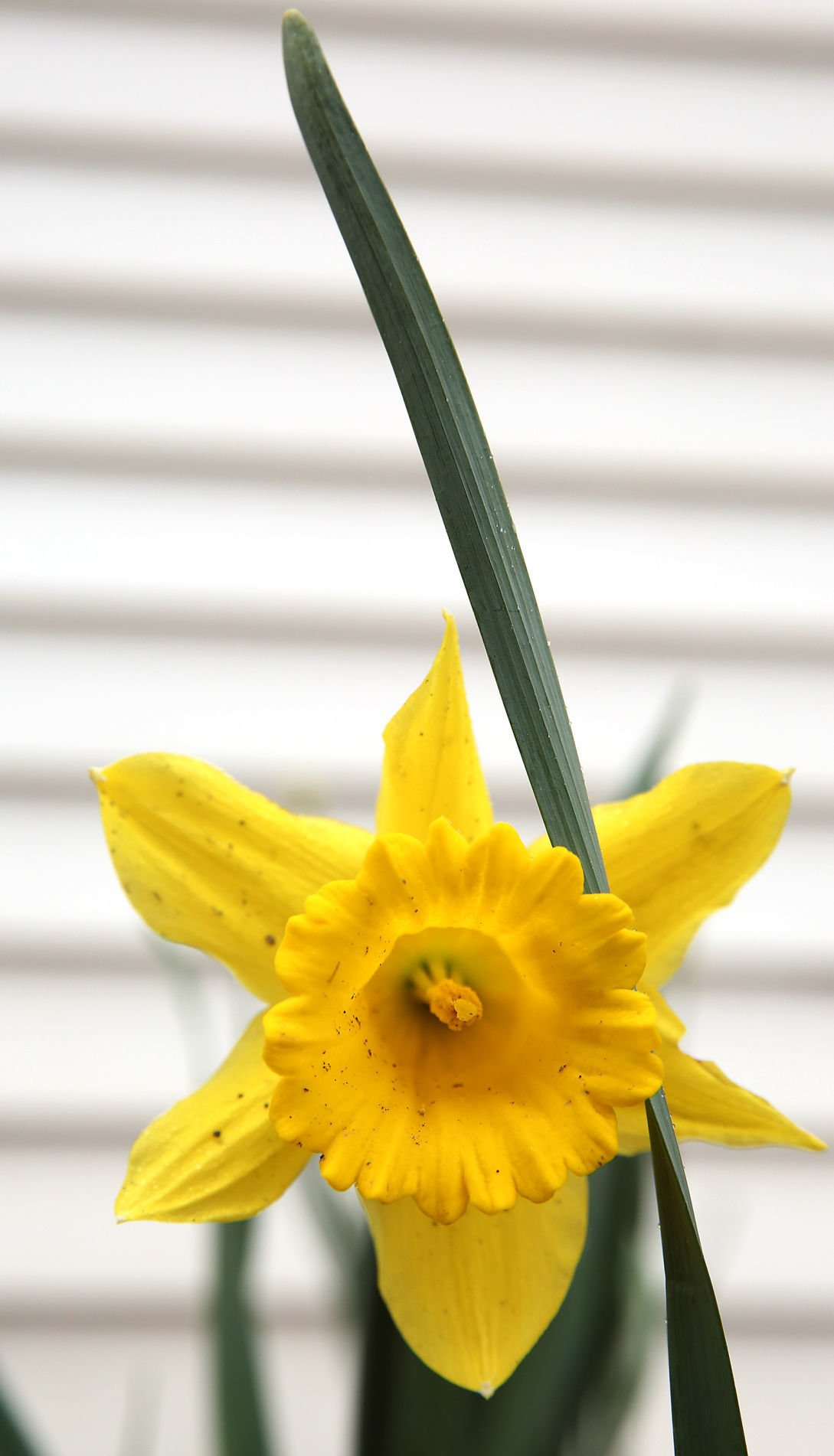 For Flowers In Spring Plant Bulbs In Fall Home And Garden