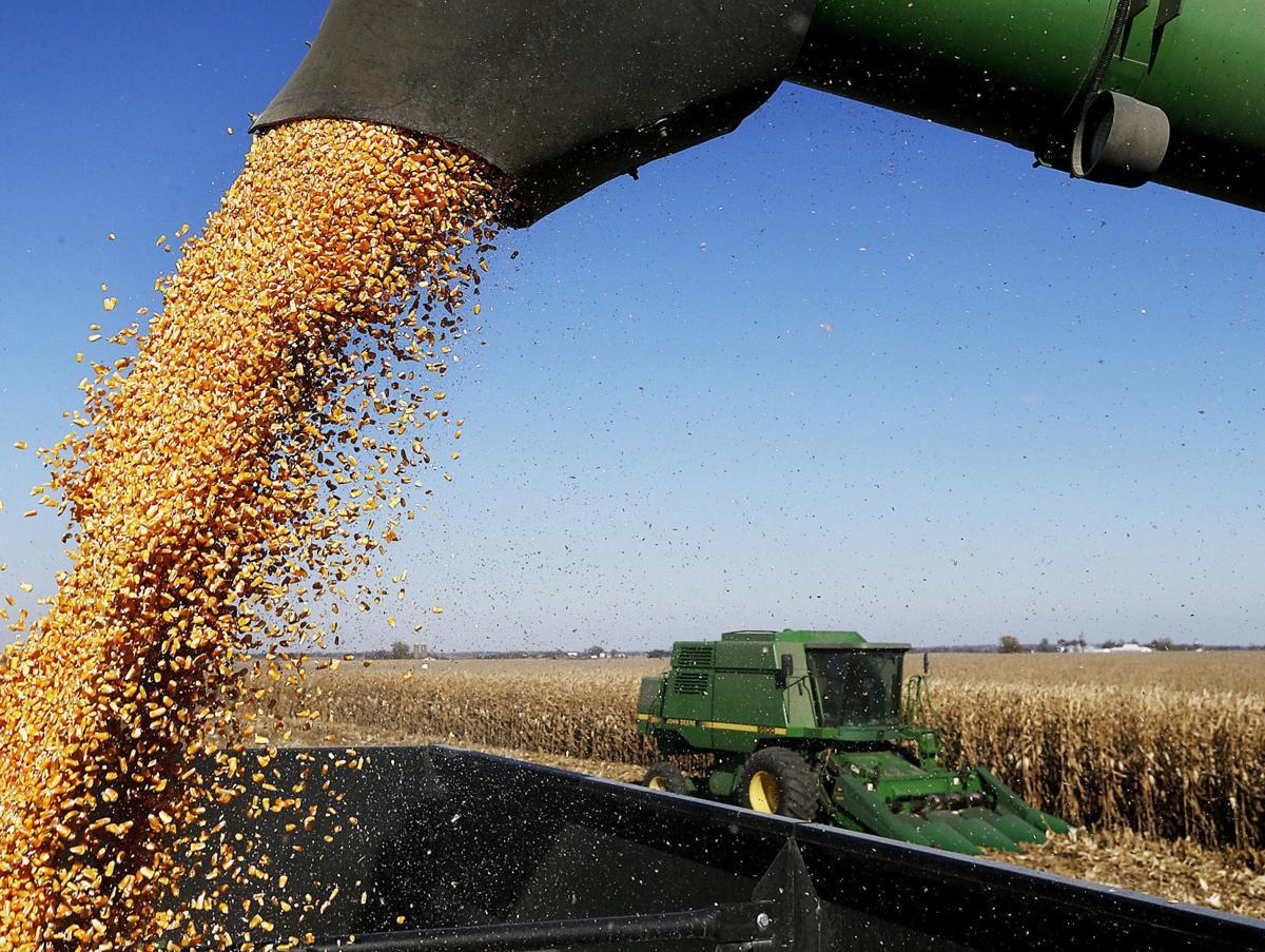 110917-harvest-009