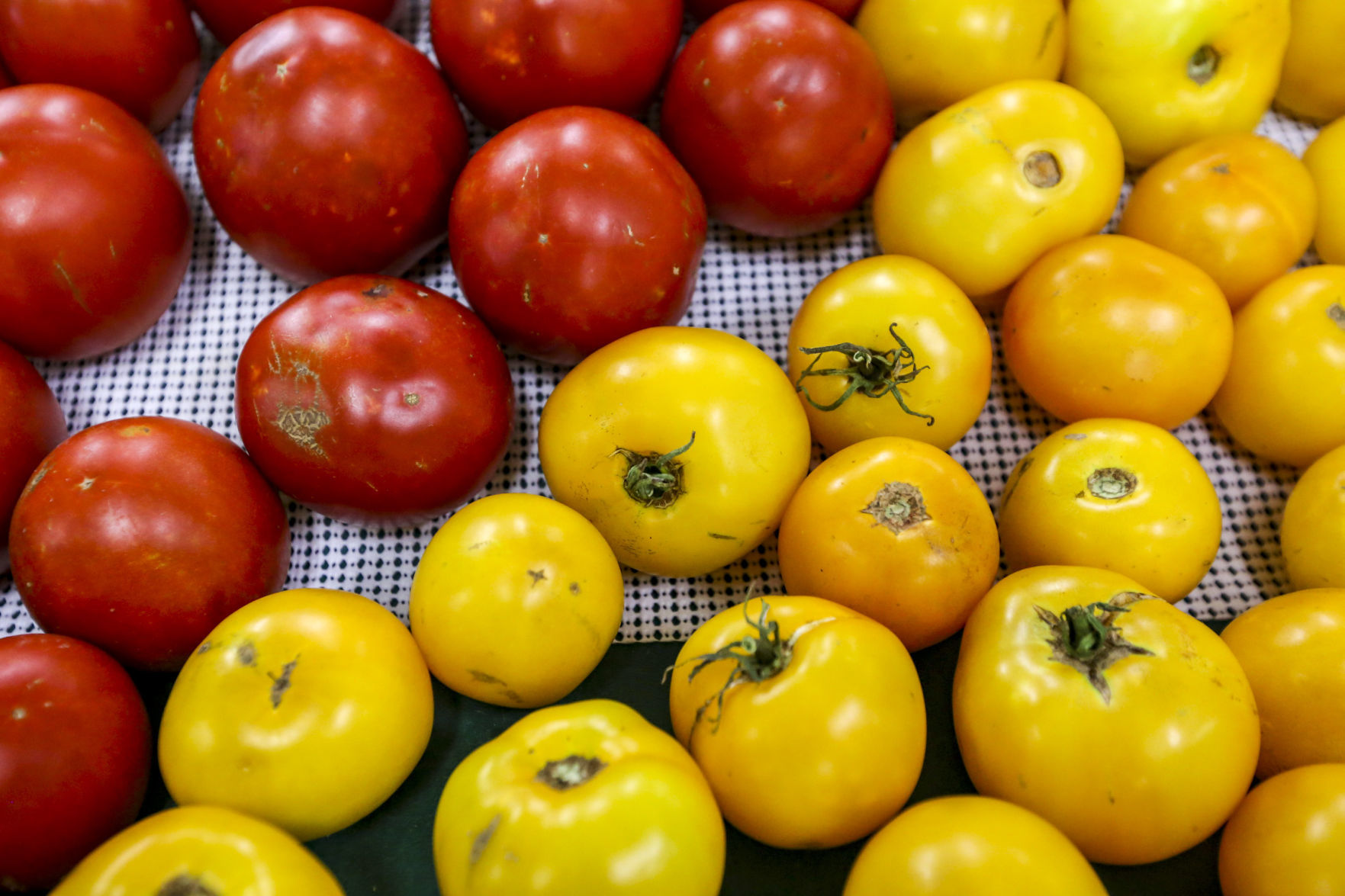 Determinant varieties of tomatoes: the best varieties for open ground and greenhouses 66