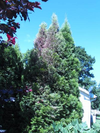 Now is time to scout trees for bagworms | Home and Garden