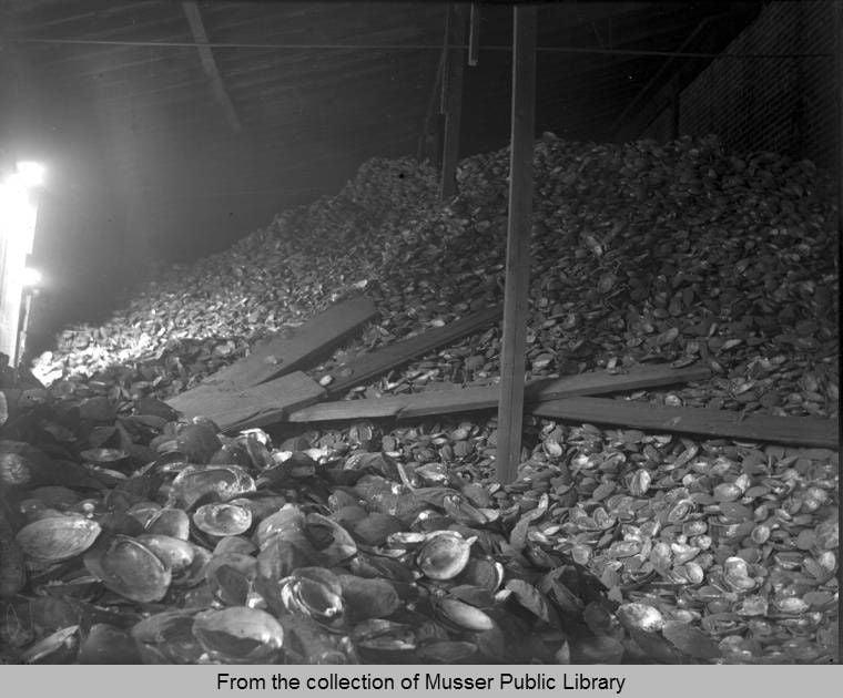 Clam shells 1913