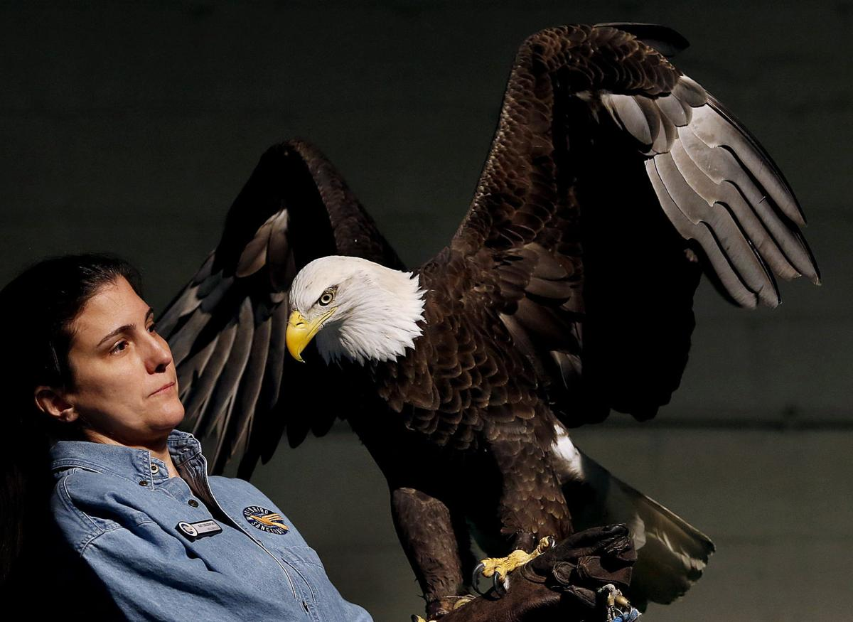 Students swarm Expo Center for Bald Eagle Days | Local Education ...