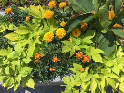 urban campus planter