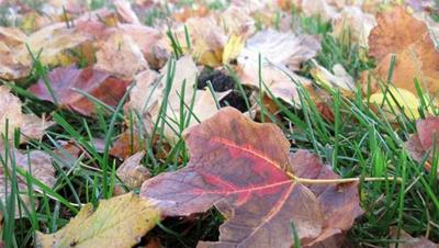 Rake up leaves and dead grass.