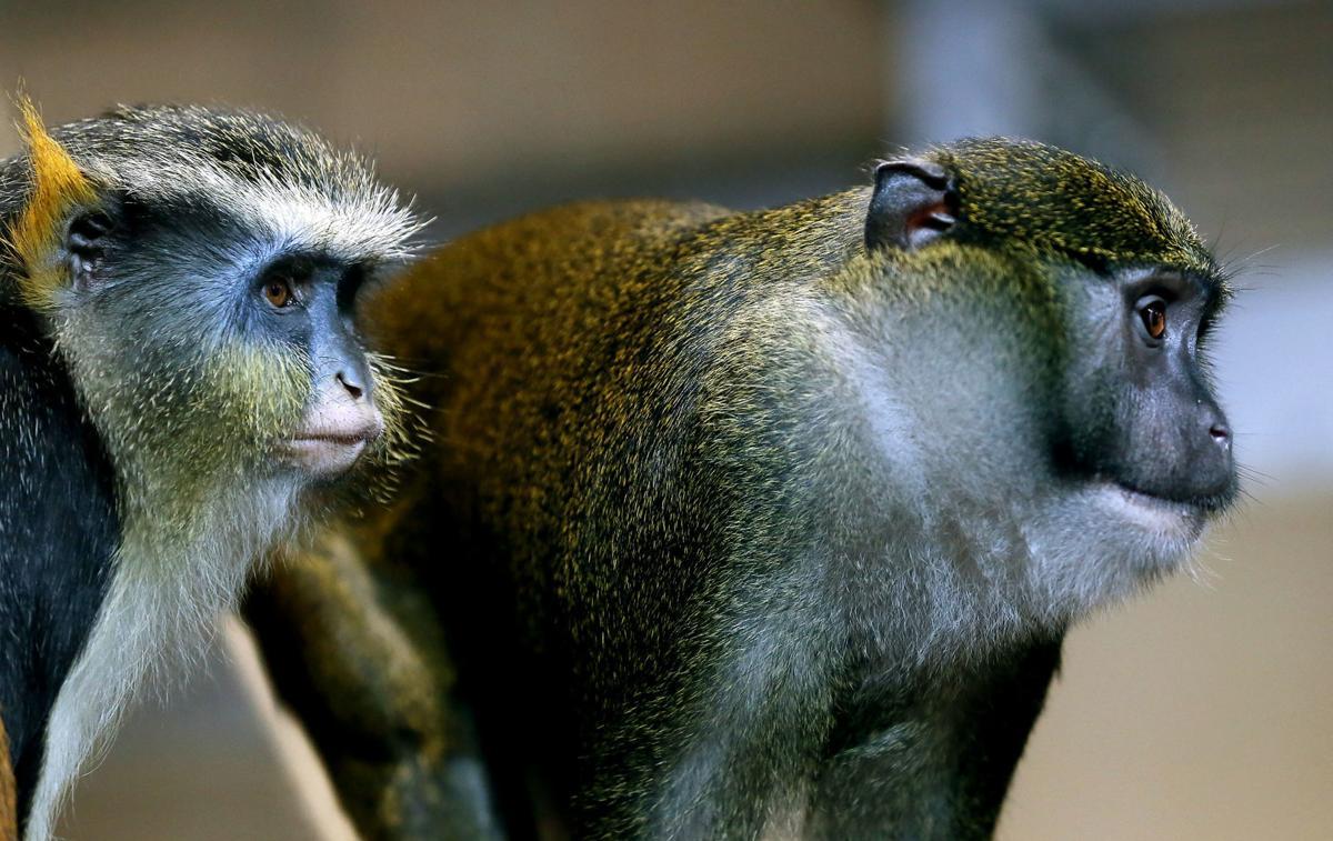 041819-mda-nws-primates-001