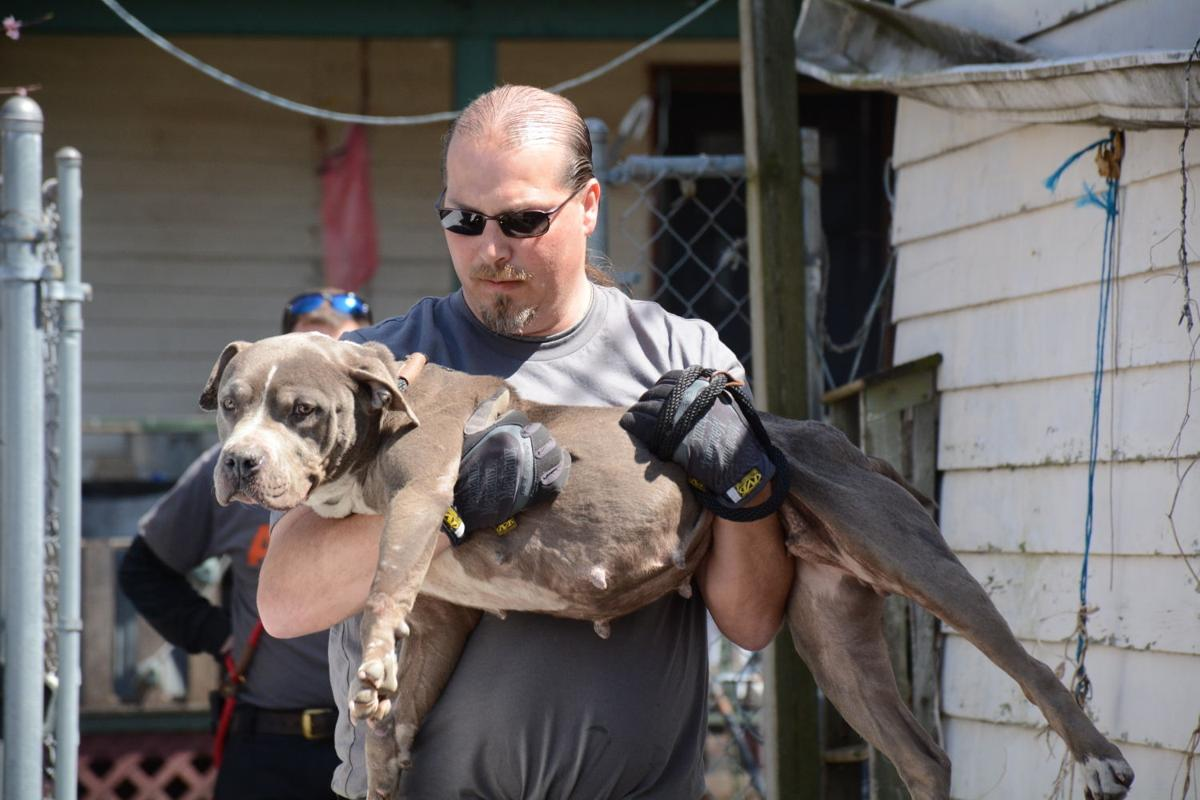 Dog-fighting investigation