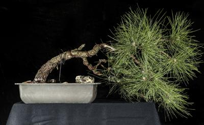 7 specialty plants