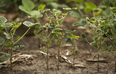 Midwest Drought Crops