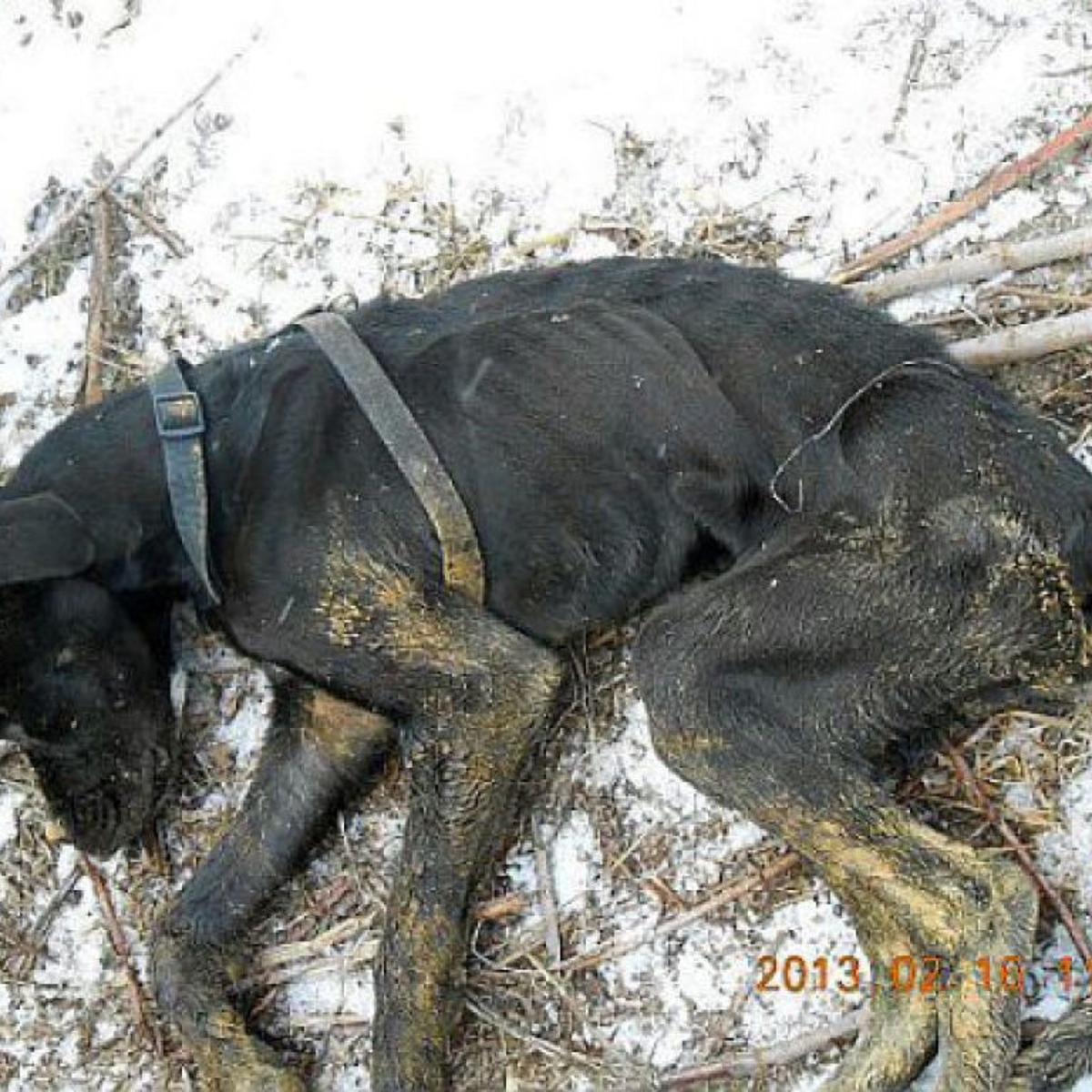 2 more arrests in Waterloo dog death | Local News | qctimes com