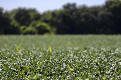 070618-qct-soybean-003