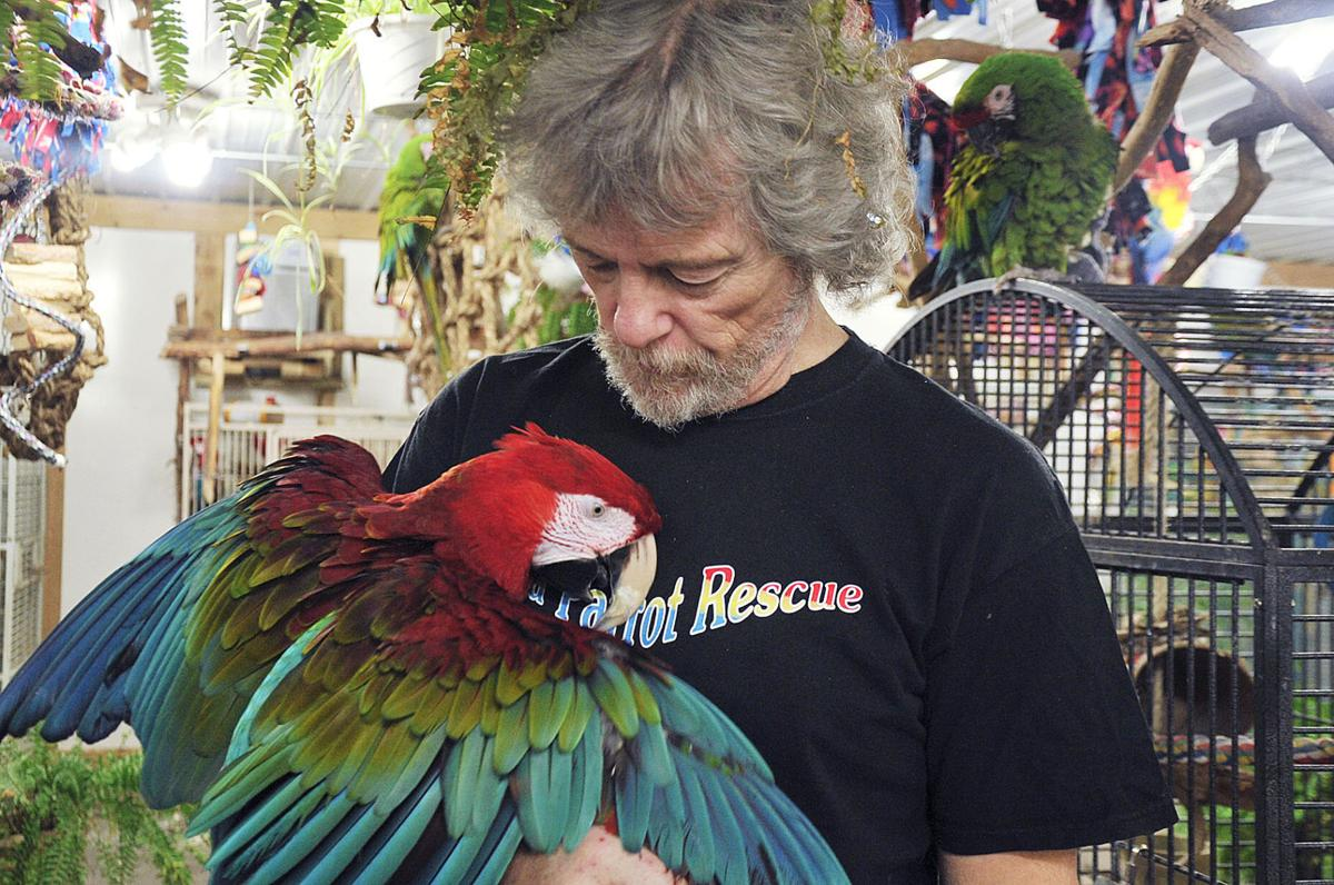 Notes Noon Q C Parrot Lovers Flock Together Without A Squawk Notes Noon Qctimes Com