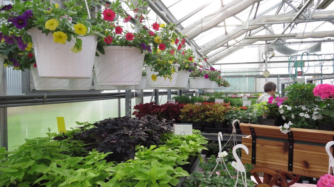 Q-C PLANT SALES | Home and Garden | qctimes.com