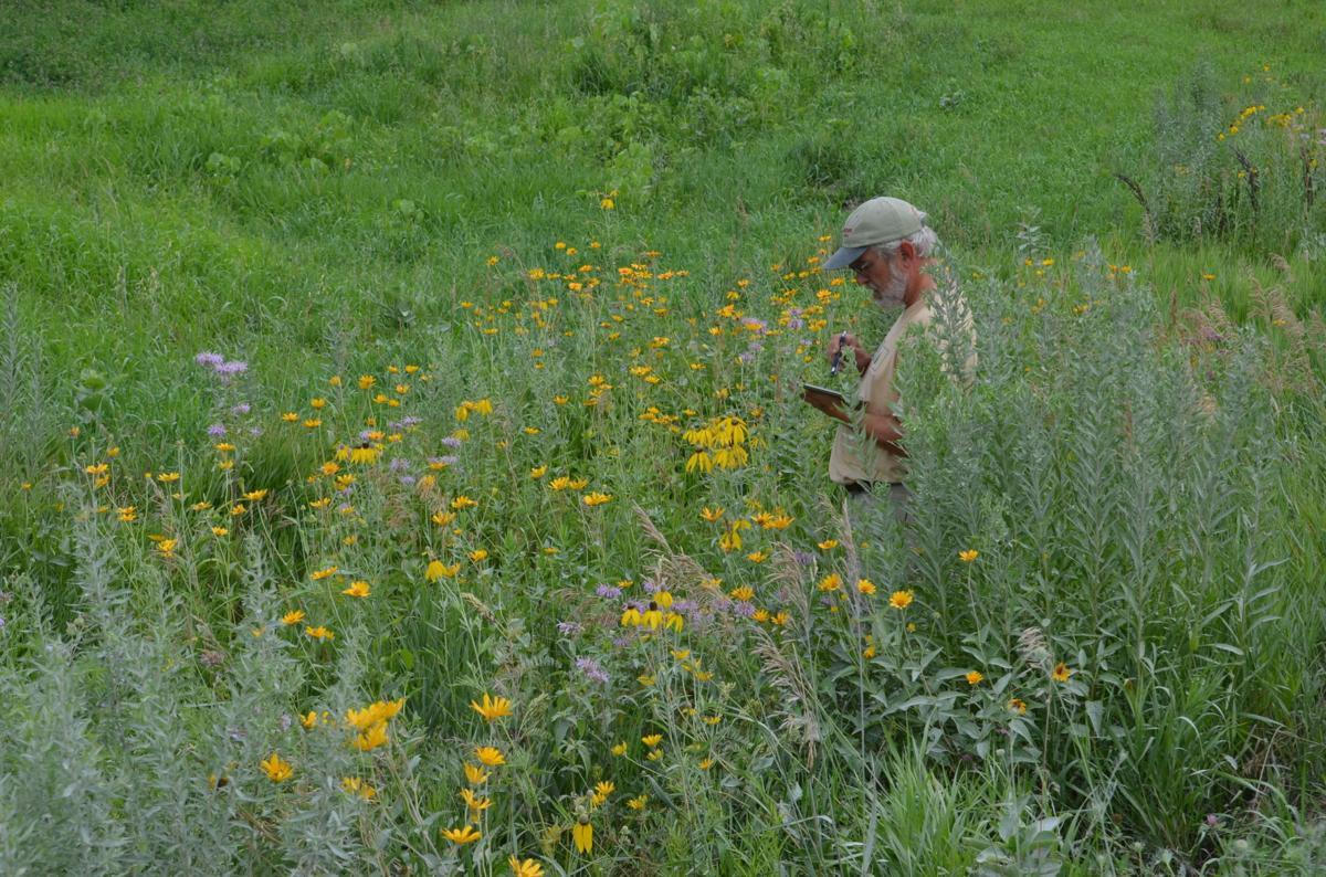 Leland in prairie