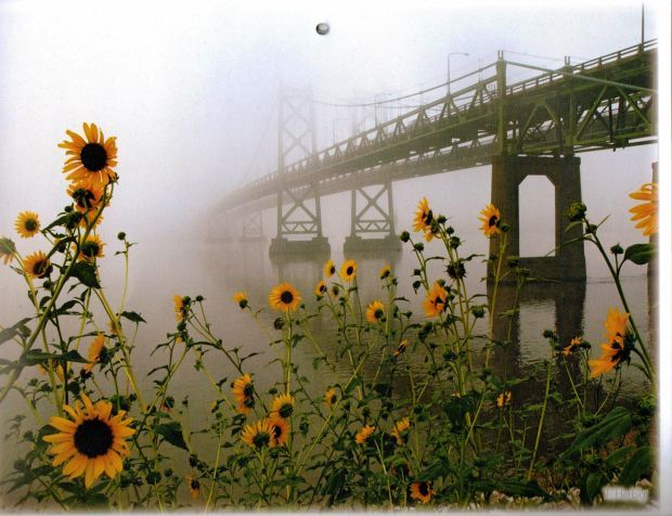 bridge sunflower photo