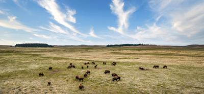 The regenerative Wolakota Buffalo Range brings back bison