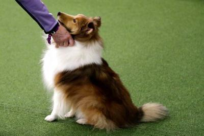 Stressed out? Your dog may feel it too, study suggests