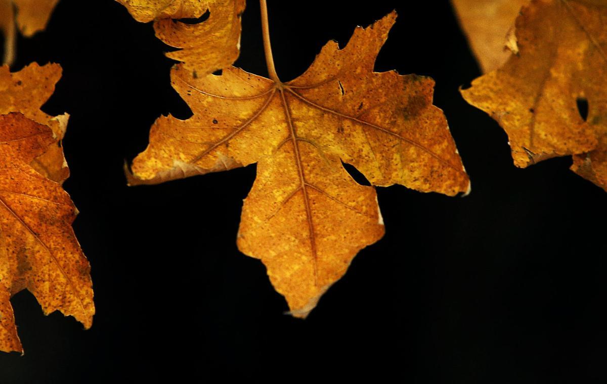 111317-Leaf-001