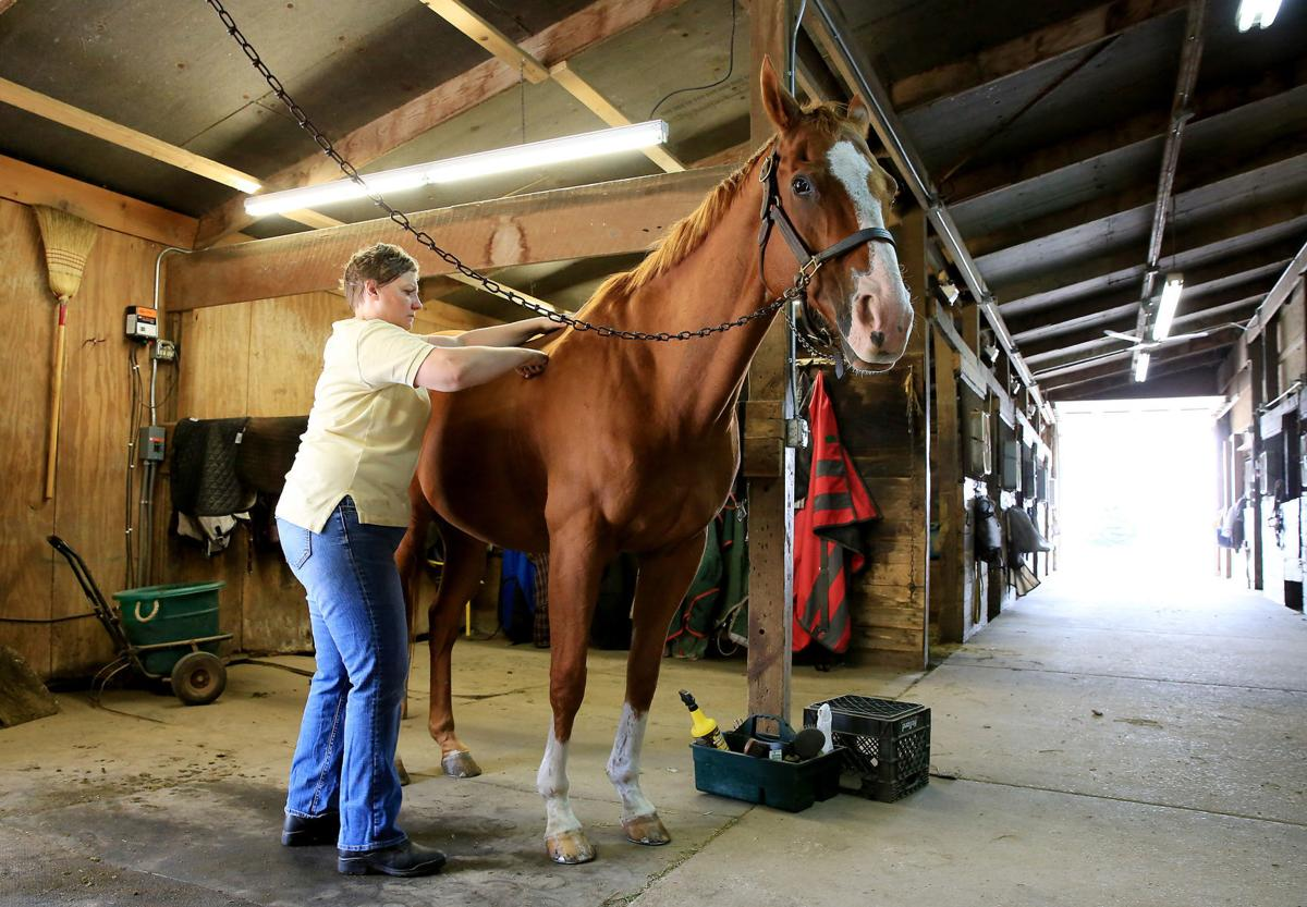 Horse-Massage-001