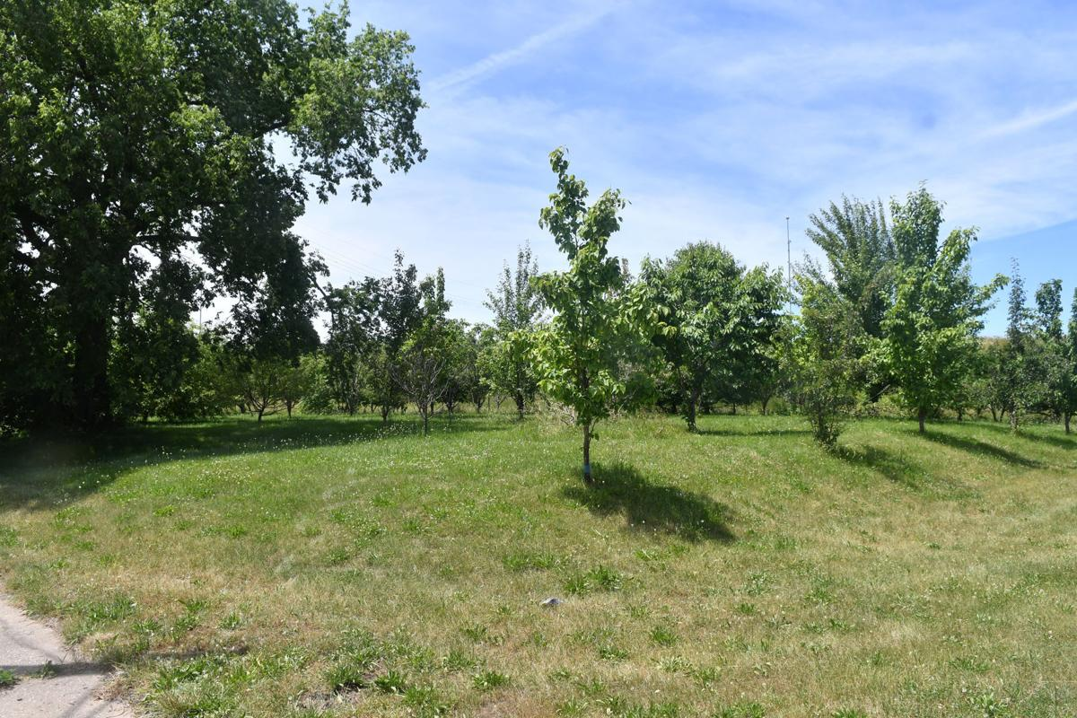 Rock Island sells community orchard to woman who planted it |  Politics and Elections