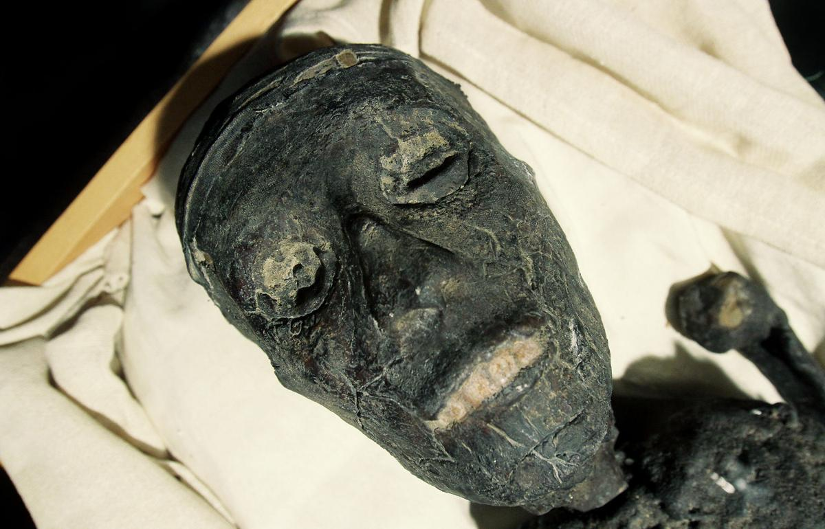 The Curse Of King Tuts Tomb Torrent: See King Tut Come 'alive' At The Putnam Museum