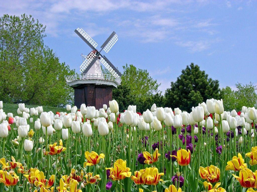 Tulip Time Fest
