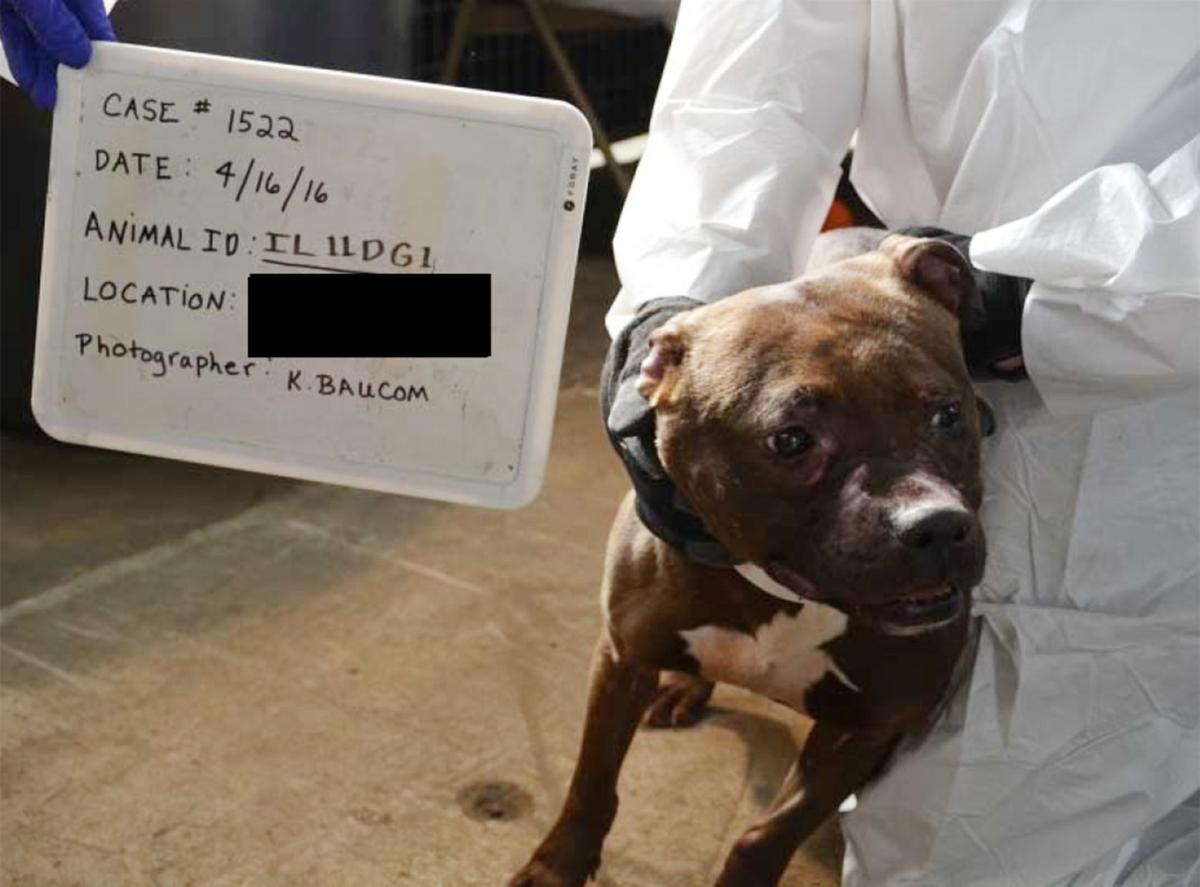 Ten indicted in Quad-City dog-fighting ring | Local Crime