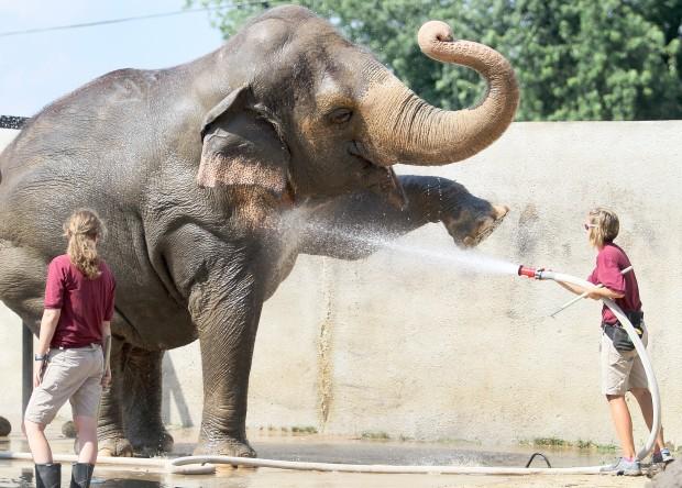 071713-elephants9