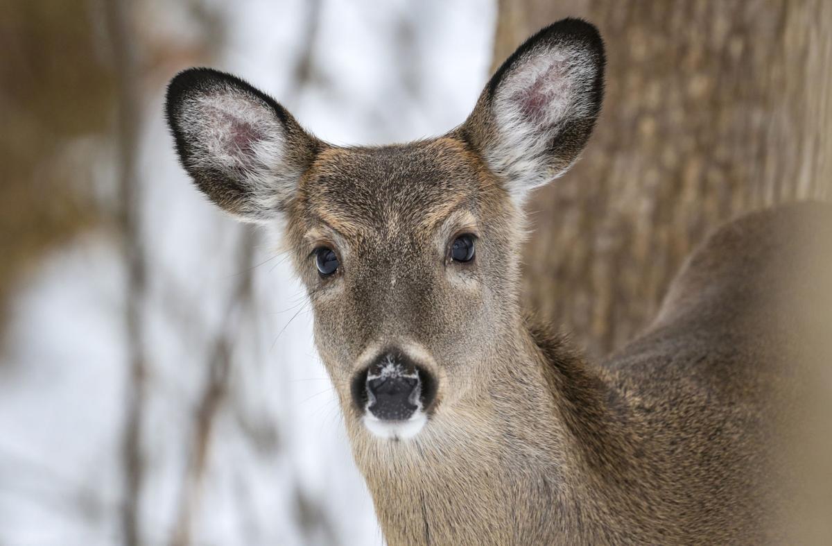 012319-qct-qca-deerhunt-001