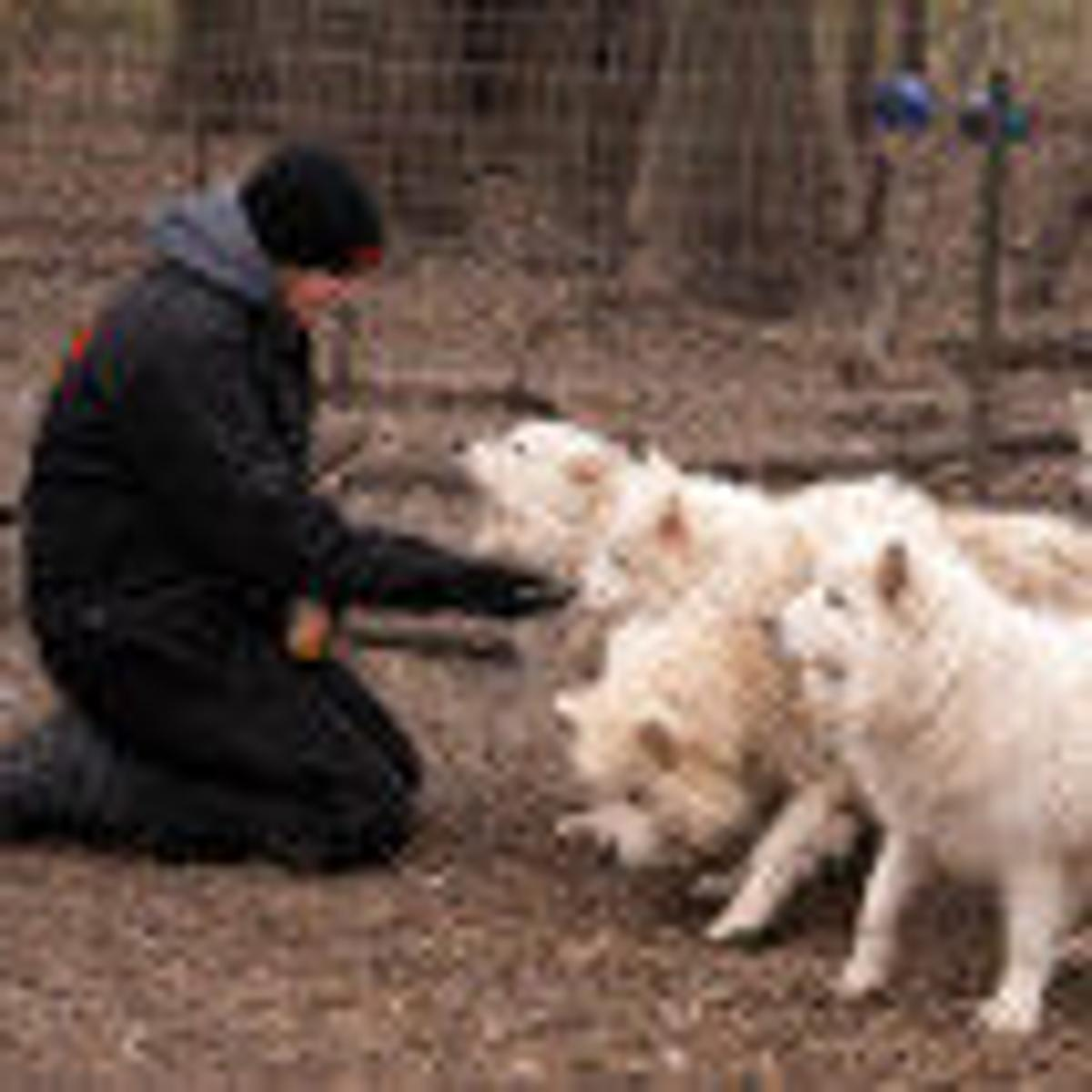 humane society of scott county helps with rescue of 170 dogs from puppy mill news qctimescom