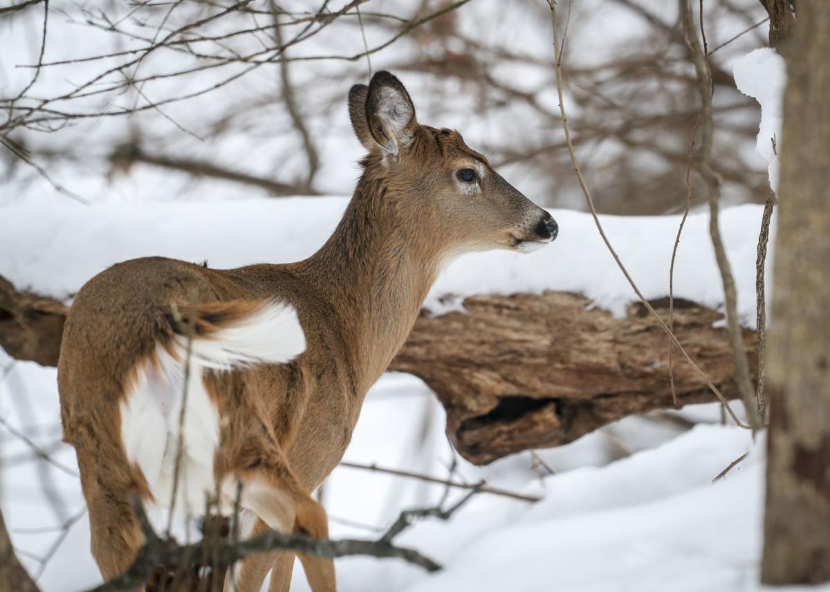012319-qct-qca-deerhunt-003