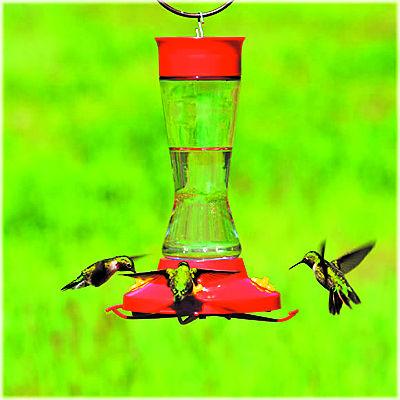 Wallaces Hummingbirds 3