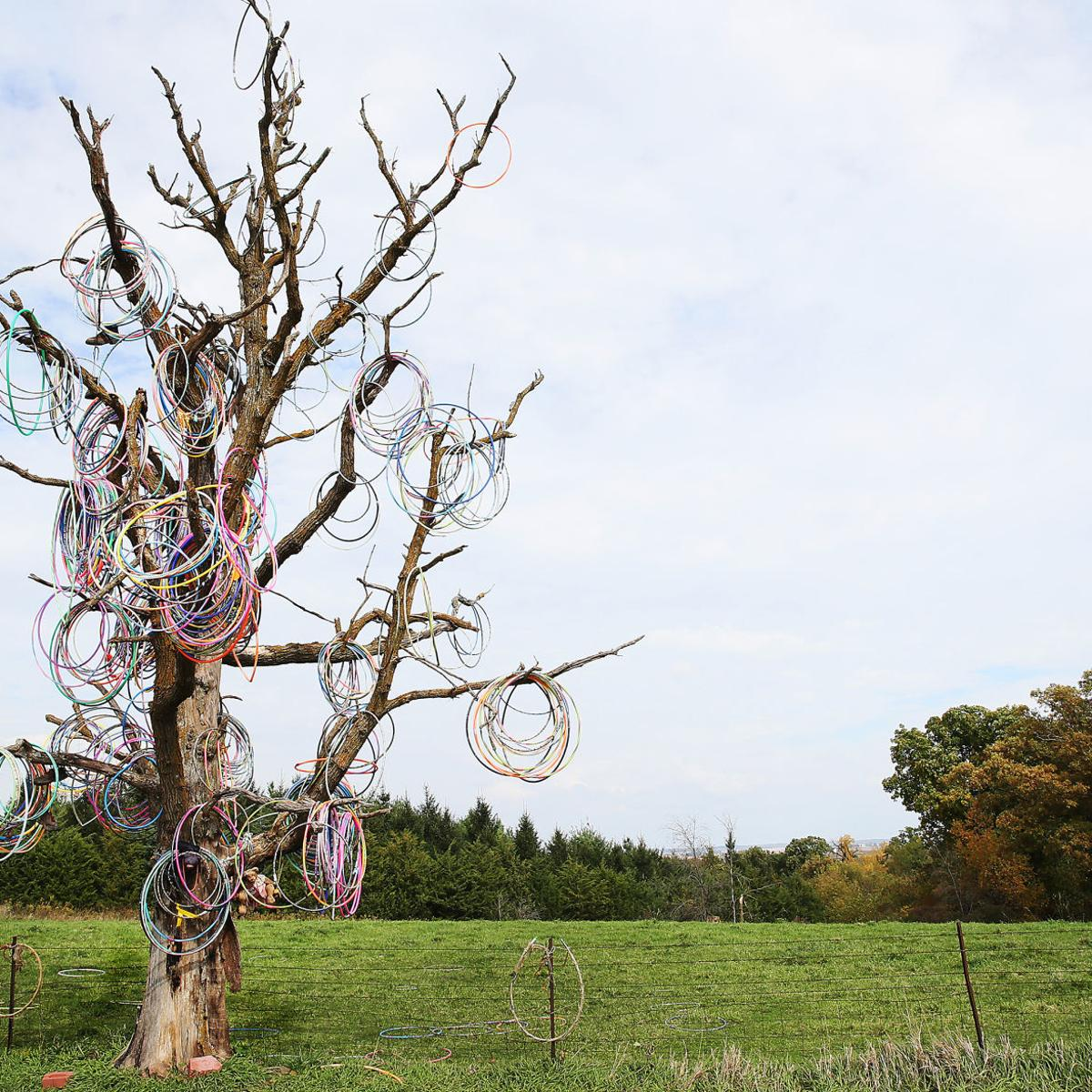 Amber Nevada Wiki this hula hoop tree in small iowa town is a reminder that