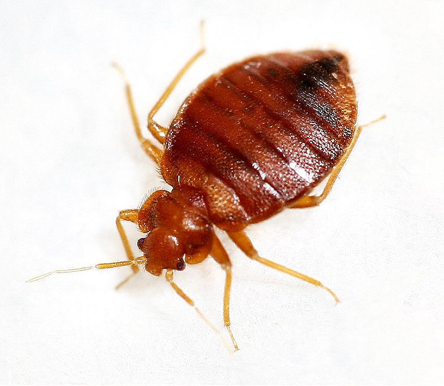 011319-qct-fea-bedbugs-018