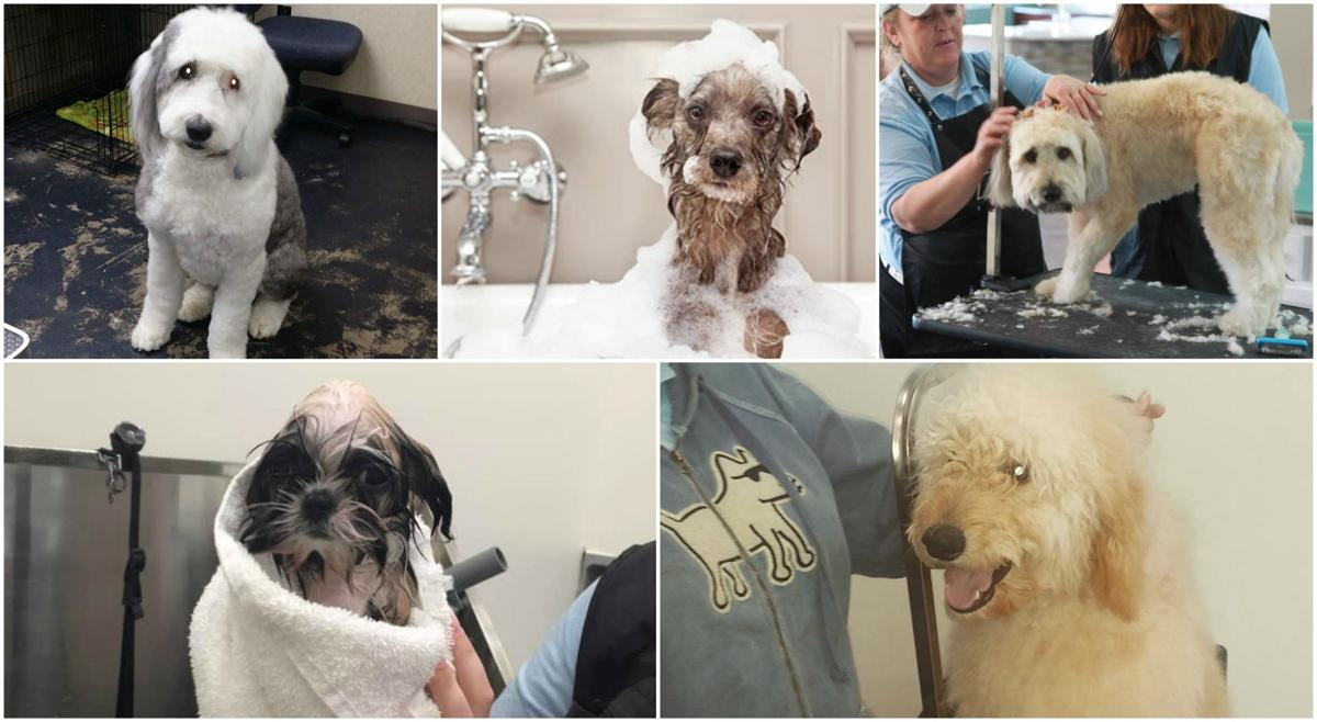 dog grooming quad cities