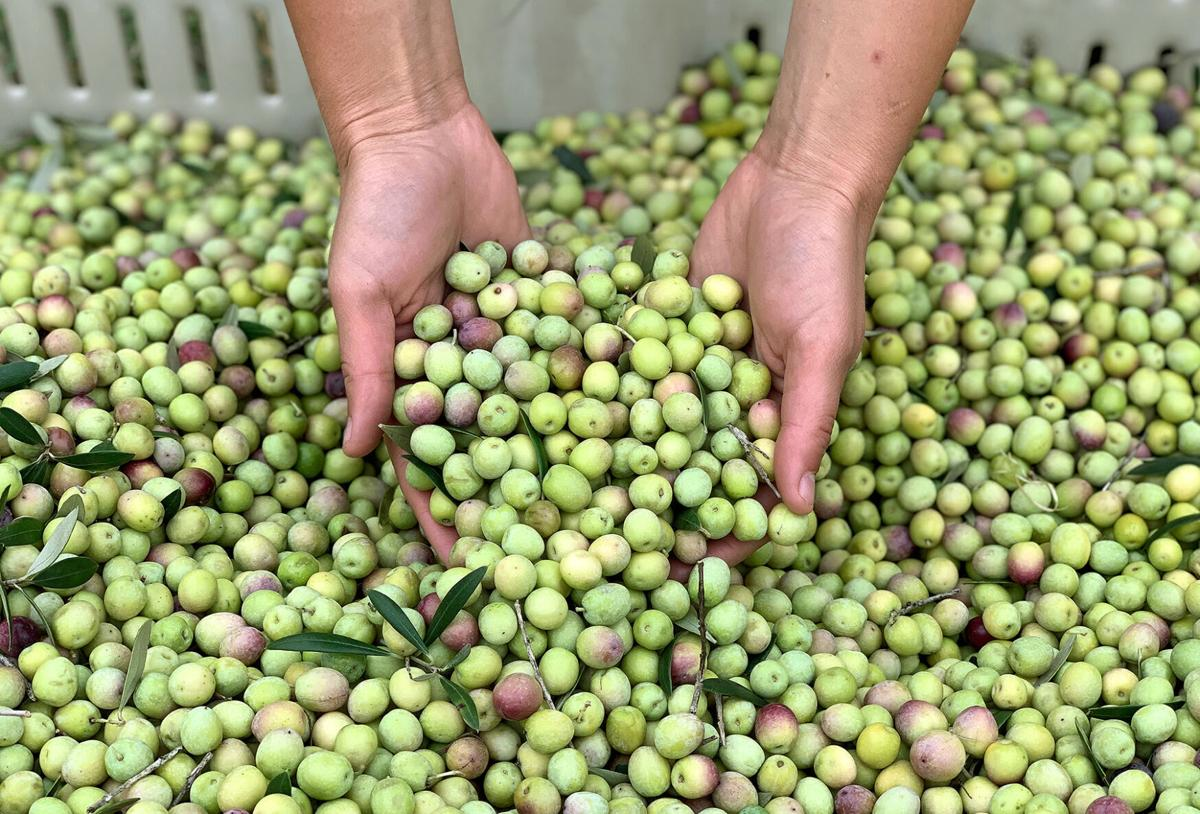 Texas Hill Country Olive Company