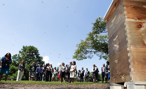 Vice president's wife installs beehive at official residence