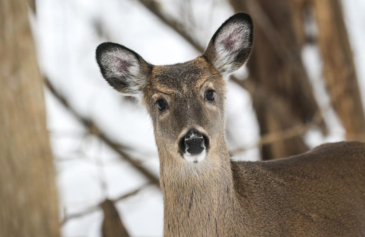 012319-qct-qca-deerhunt-012