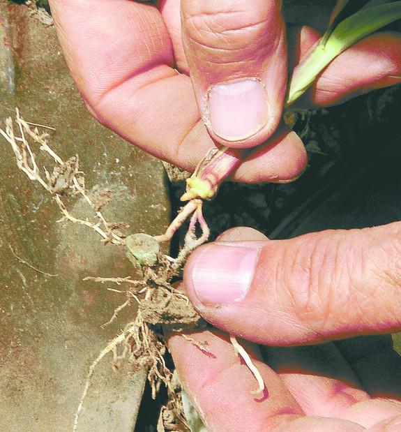 Planting Planting3_52312