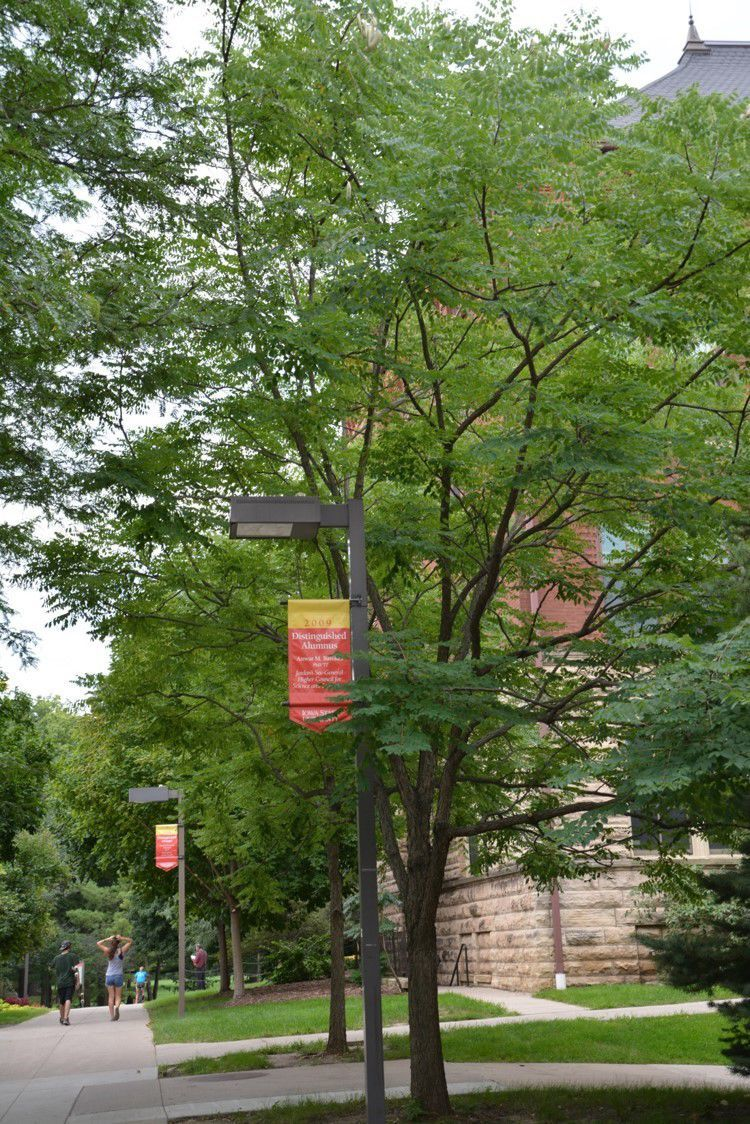 4 good choices for trees | Home and Garden | qctimes.com