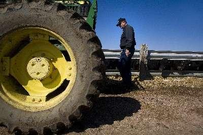 Corn prices eating away cattle profits | Local