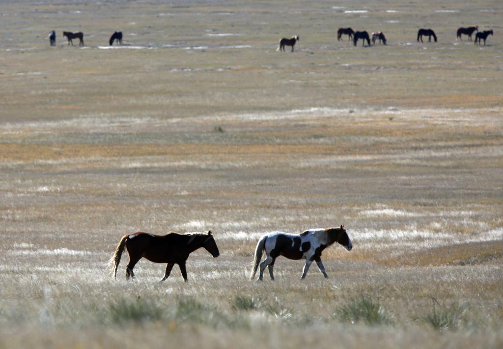 Feds' wild horses now roaming Powerball winner's land | Local