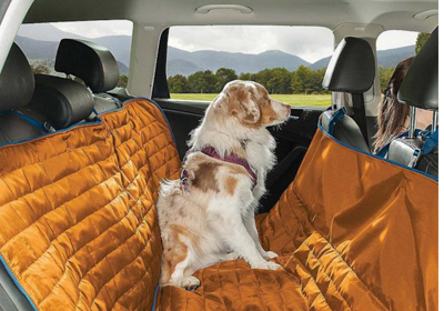Who's Buckling Up their Pets and How? Pet travel survey reveals highlights - Image