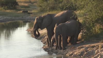 Kruger National Park elephants