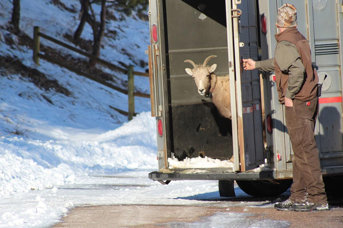 bighorn release 2