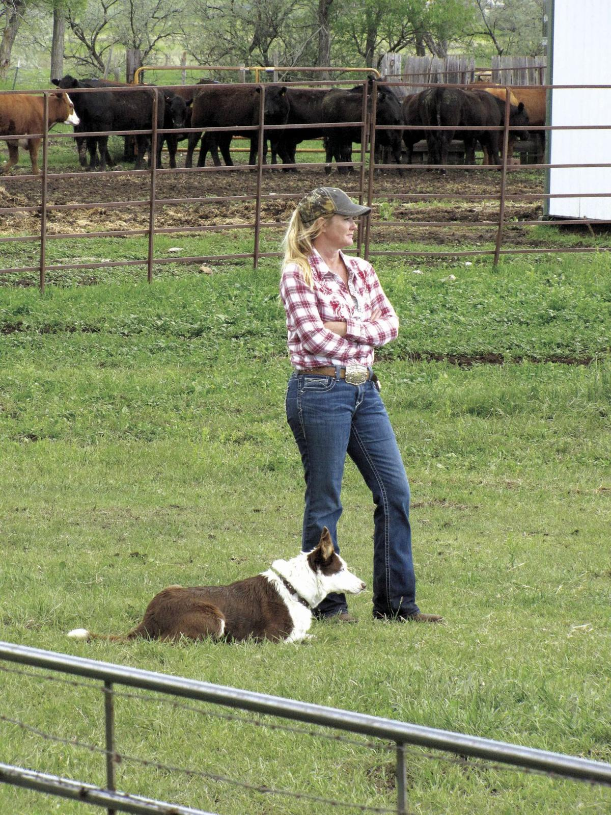 Rain doesn't dampen cattle dog trialers enthusiasm | Hot Springs