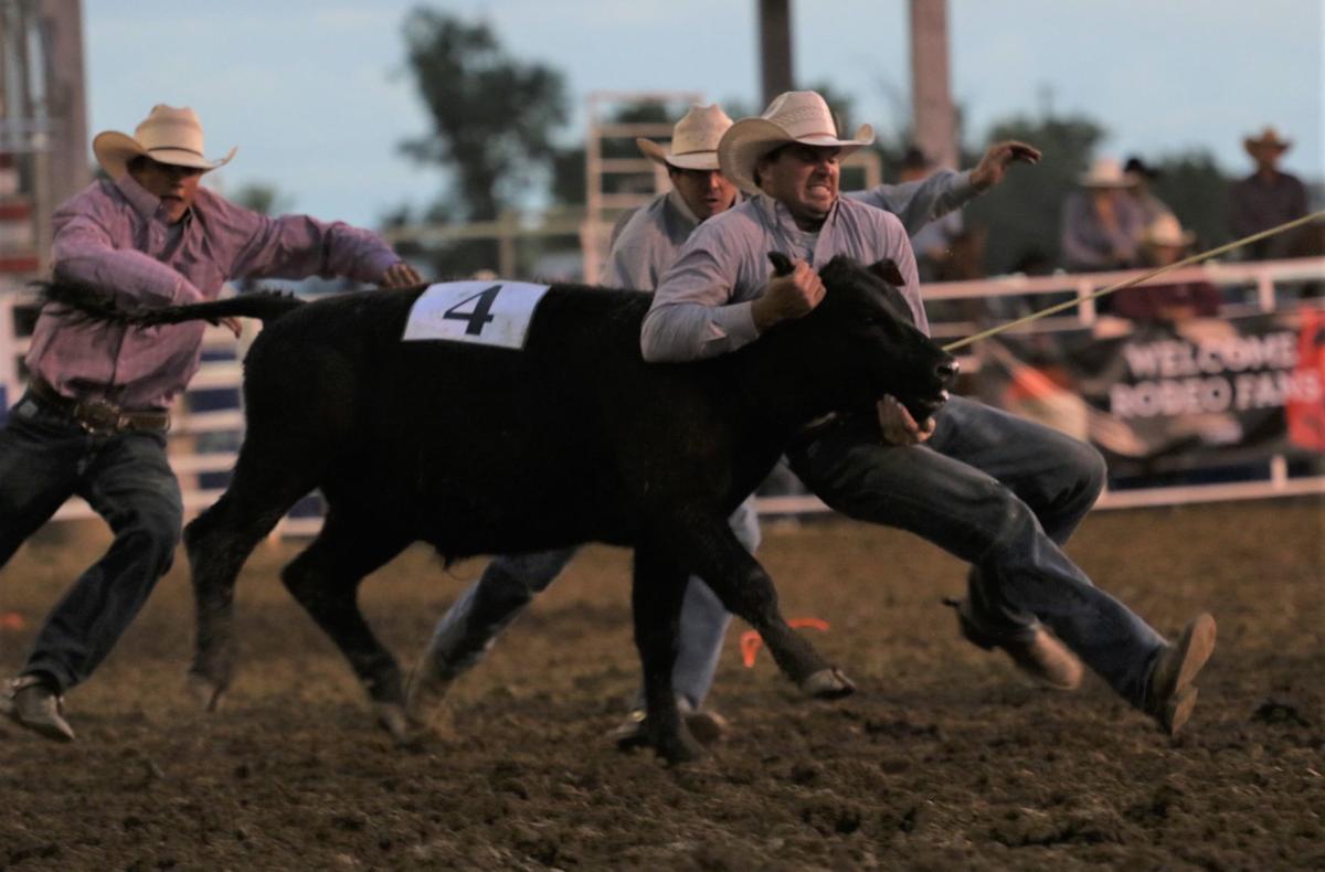 Kudlock Ranch cow milking