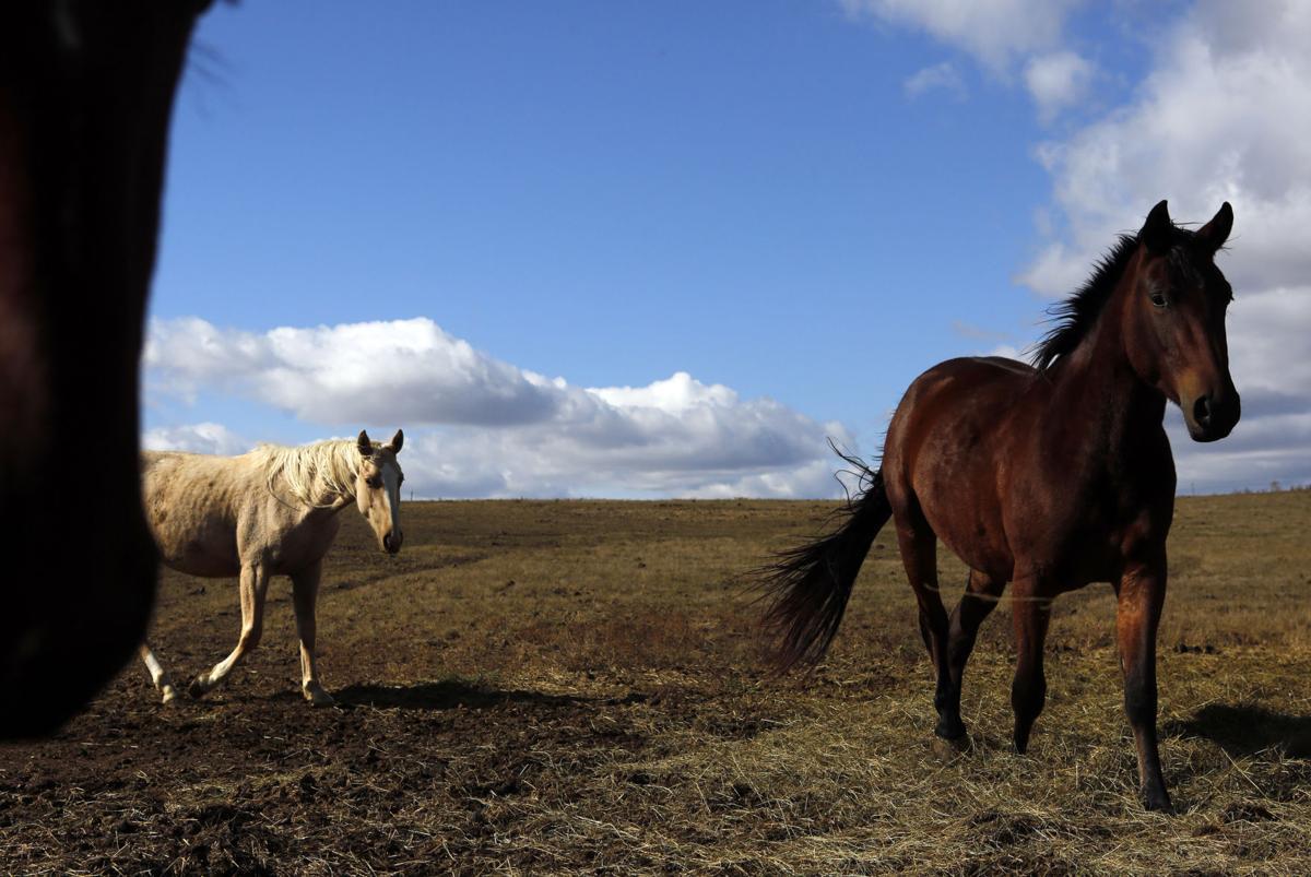110816-nws-horses1 (copy)
