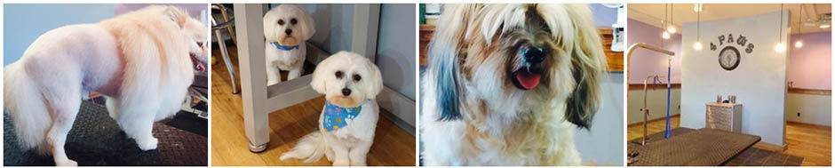 preschool rapid city sd 4 paws grooming and daycare groomer grooming 638
