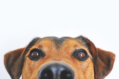 close dog